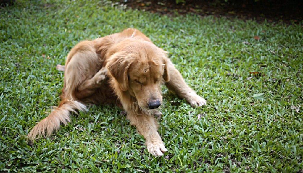 gtldna-dog-allergy-test-dogs